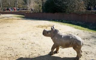 Nashorn Baby Kibo