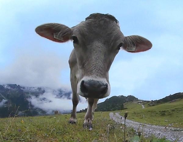 Sind Tiere 360 Grad Kamera scheu