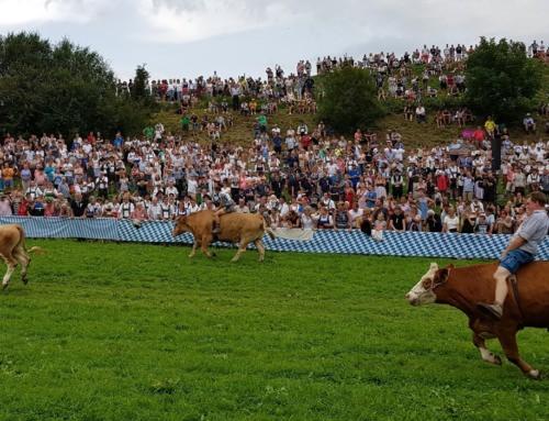 Ochsenrennen Haunshofen