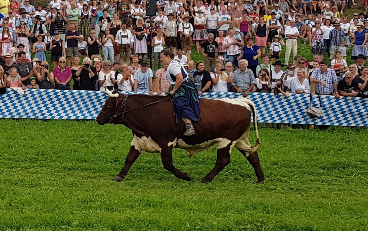 Ochsenrennen Haunshofen Seppi Marlis